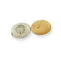 Fossil Coral Flat Oval Beads 20x15mm (2-Pcs)