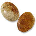 Fossil Coral Oval Beads 30x22mm (2-Pcs)