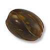 Horn Beads Spiral Carved Oval Brown 18x15mm (3-Pcs)
