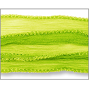 Silk Fairy Ribbon Lime